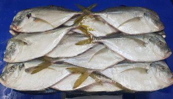 Moonfish WR